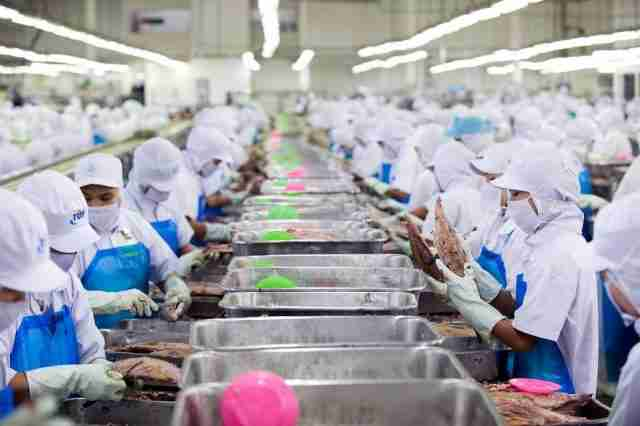 Workers process skipjack tuna at a Thai Union Frozen Products packaging plant in Samut Sakhon