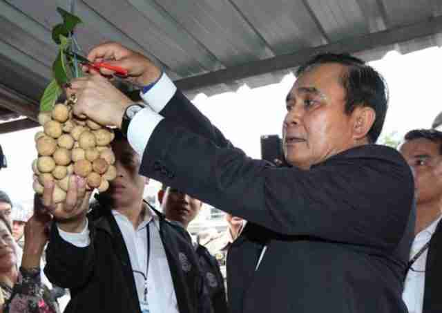 Prime Minister Prayut Chan-o-cha picks some longgong while visiting fruit growers in tambon Tapong, Muang district of Rayong