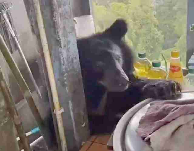 Many tourists went to the Pha Trom Jai cliff and most of them said they had seen a Facebook post about an Asian black bear that was attracted by omelet at a food stall on the cliff.